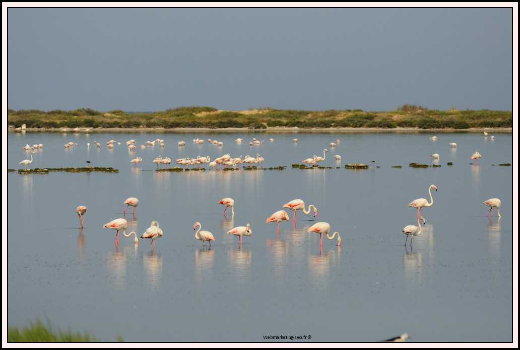 flamants-roses-tunisie-0001