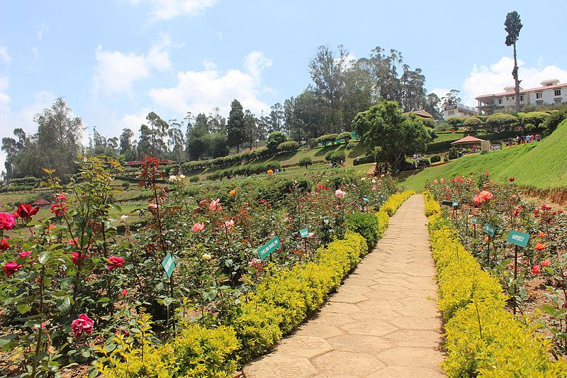 Government Rose Garden, Ooty